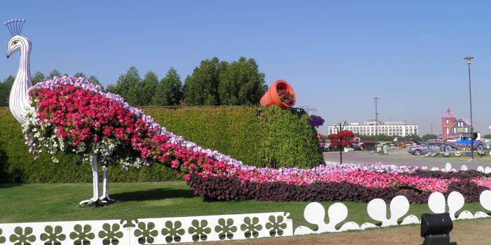 Taman Bunga Merak di Dubai Garden salahsatu inspirasi Camat Medan Amplas mengubah areal kantornya menjadi taman bunga. Foto: Internet